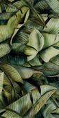 Uniwersalne Inserto Szklane Leaf A  30x60 Natura 30 x 60 cm