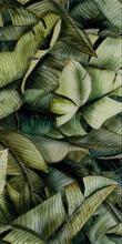 Uniwersanle Inserto Szklane Leaf A  30x60 Natura 30 x 60 cm