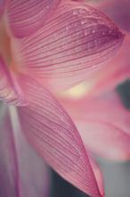 Acapulco Rosa Inserto Kwiat 25x40 25 x 40 cm