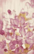Manarola Inserto Kwiat B 25x40 25 x 40 cm