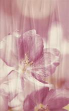 Manarola Inserto Kwiat C 25x40 25 x 40 cm