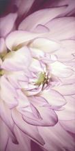 Sorenta Inserto Kwiaty B 30x60 Sorenta / Sorro 30 x 60 cm